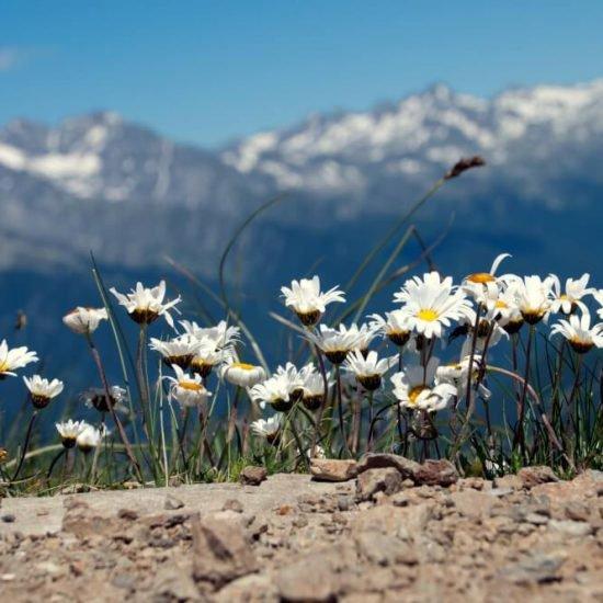 Chalet Schmied - Ferien in Südtirol (13)